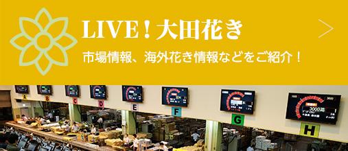 LIVE!大田花き 市場情報、海外花き情報などをご紹介!