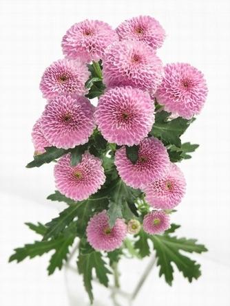flower_2016_011