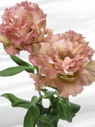 flower_2016_055