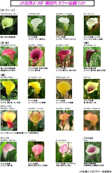 カラー品種リスト(よつば)