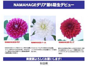 6th NAMAHAGE