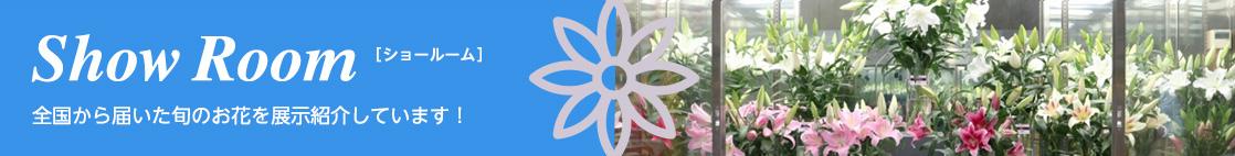 Show Room[ショールーム]全国から届いた旬のお花を展示紹介しています!
