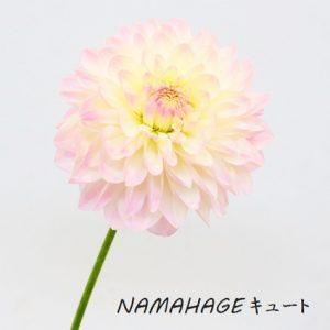 NAMAHAGE2