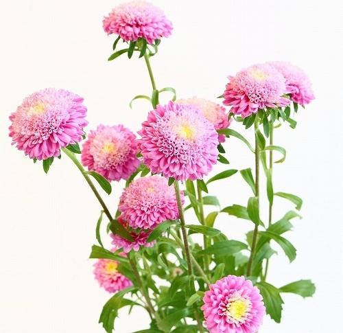 flower_2017_038