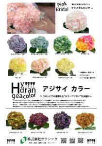hydrangeacolor20180302