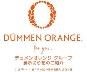 dummen orange 2018