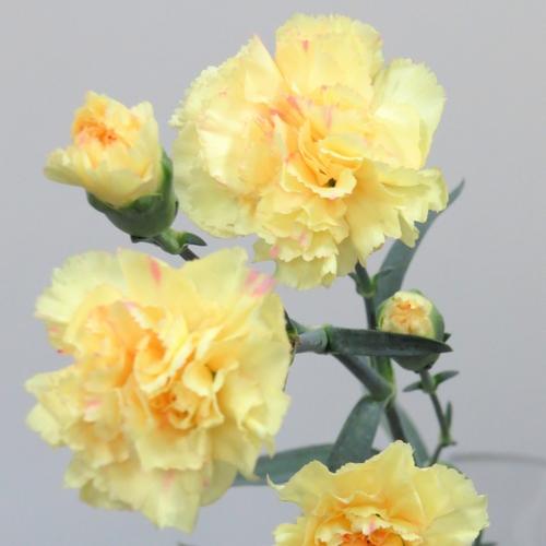 flower_2018_17_01
