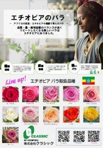 Ethiopia rose2019