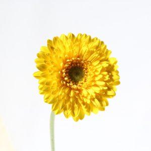 190408C353