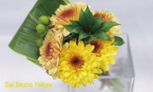 sei bruno yellow