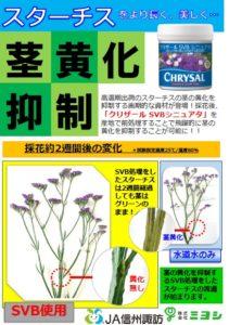 shinsyu-miyoshi statice 1