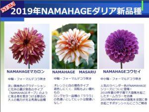 NAMAHAGE2019NEW