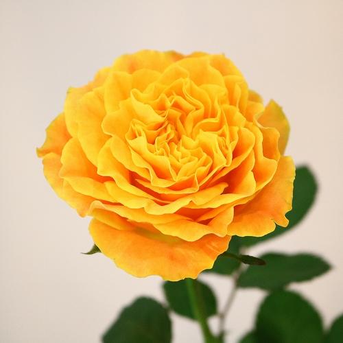 flower_2019_015_01