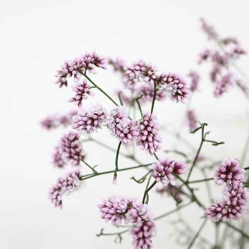 flower_2019_037_01