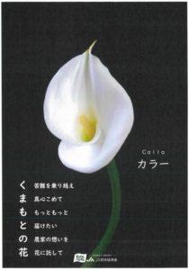kumamoto30