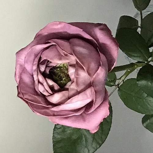 flower_2020_015_01