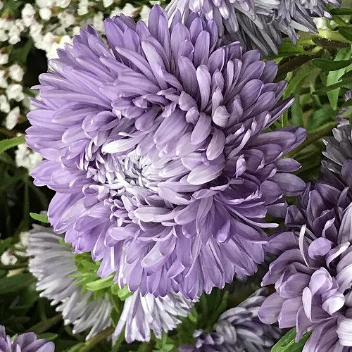 flower_2020_038_01